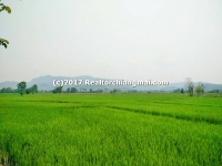 "Land for Sale ""Baan Thi"" Lamphun Thailand"