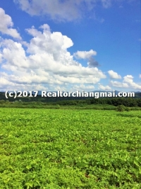 Land for Sale in Fang District, Chiangmai, Thailand.