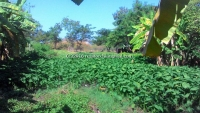 Nice Land for Sale 5 Rai  in Sansai Chiangmai Thailand