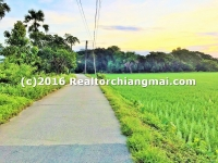 Nice Land for Sale 13 Rai 2 Ngan 80 Sq.wa. in Sansai Chiangmai Thailand.