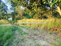 Land for Sale in San Kamphaeng Chiangmai Thailand.