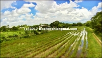 Land for Sale 75 Rai in San Kamphaeng District, Chiangmai, Thailand.