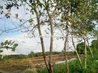 Beautiful Land for sale 46 Rai in Saraphi, Chiang Mai, Thailand.