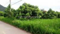 Beautiful Land with Mountain surrounding and lake for SALE in SanKamPang, Chiang Mai,