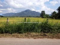 Land for Sale in San Kamphaeng, Chiang Mai