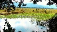 Beautiful Lot land for sale in Mae Ta Lamphun, Thailand