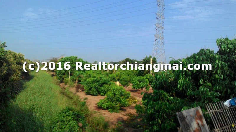Land for sale in Saraphi, Chiangmai, Thailand.