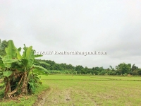 Land for Sale in Mae Rim, Chiangmai, Thailand.