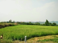 Land for sale 5 Rai 1 Ngan 7 Sq.wa in San Kamphaeng, Chiangmai, Thailand.