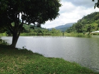 Land for sale in Mae Rim with Mountain view, Chiangmai, Thailand