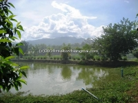 Land for sale in Mae Jo area, Chiangmai, Thailand