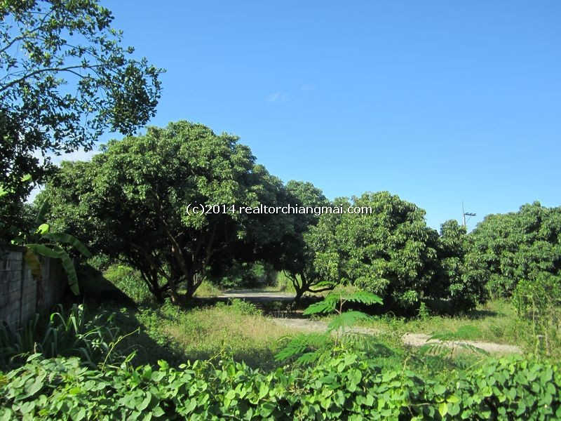 Land fore Sale in Sanpatong Chiangmai, Thailand